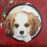 Une charmante Cavalier King Charles